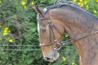 Limitation d'exploitation de chevaux